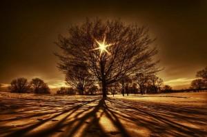 tree-13-500x332