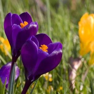 springtime1