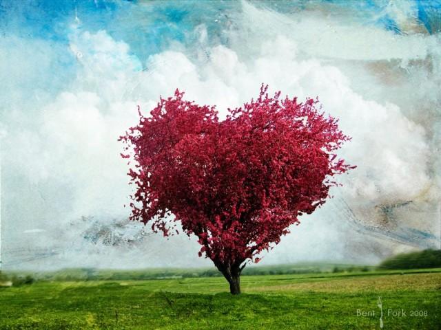 LoveTree-e1340904158819