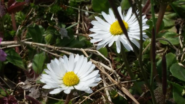 Пролет Пролет